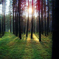 """фотоальбом """"Прогулки по лесу"""""""