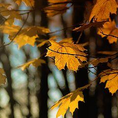 "photo ""Solo gold leaf."""