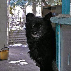 "photo ""The dog tears."""