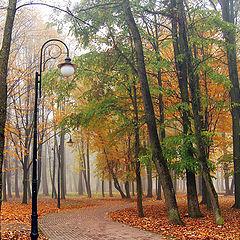 "фото ""Уводящая  в  туман"""