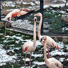 """фото """"розовый фламинго"""""""