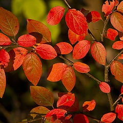 """photo """"Autumn Flowers"""""""
