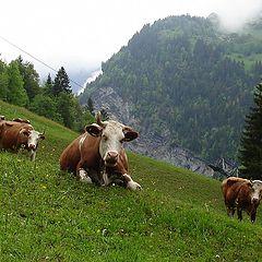 """фото """"Швейцария"""""""