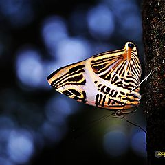 "photo ""Butterfly"""
