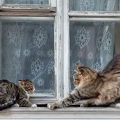 """photo """"Cats on a window))"""""""