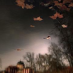 "фото ""The autumn flying"""