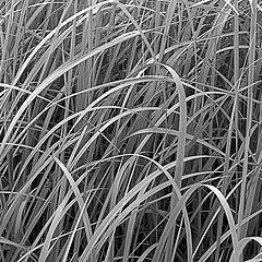 """фото """"Просто трава"""""""
