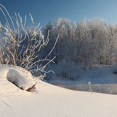 """фото """"Морозный ежик"""""""