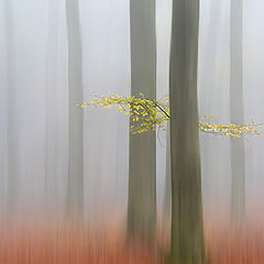 """фото """"Misty afternoon"""""""