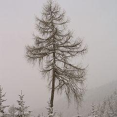 "фото ""Snowfall in Austrian Alps"""