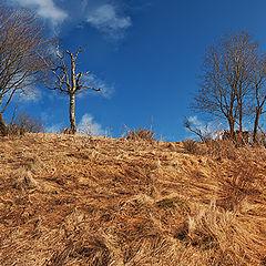 "фото ""Осенний-пейзаж_2 (autumn-landscape_2)"""