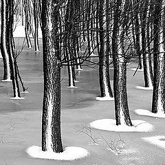 """фото """"Winter palette"""""""