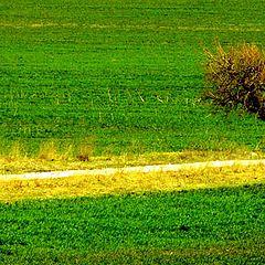 "photo ""пътят..."""