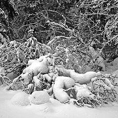 "photo ""Fresh snow"""