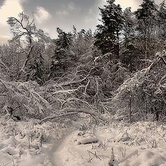 "photo ""Snow chaos."""