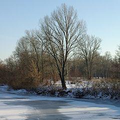 "фото ""Краски зимы"""