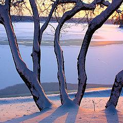 "фото ""Winter Contrasts"""