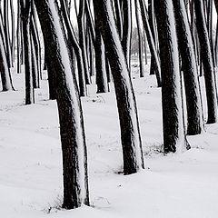 """фото """"Graphics Winter"""""""