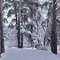 """фото """"заколдованный лес"""""""
