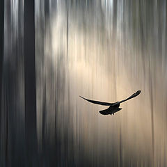 """фото """"Flying in the misty wood"""""""