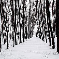 """фото """"Winter Graphics"""""""