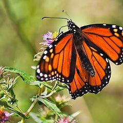 "фото ""the monarch"""