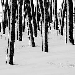 "фото ""Trunks in the snow"""