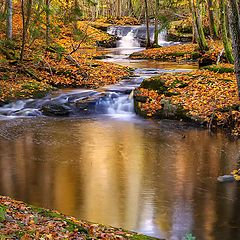 "photo ""Fall...."""