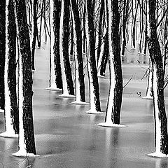 "фото ""Frosty forest"""