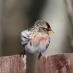 """photo """"Curious birdie"""""""