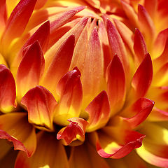 "фото ""Flower on fire"""