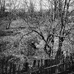 """фото """"Заброшенный монастырский сад. 1976г."""""""
