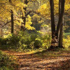 """фото """"Осенние тропки"""""""