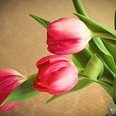 """фото """"цветочное настроение"""""""