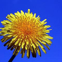 "фото ""Joy Spring"""