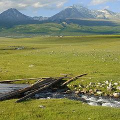 """фото """"Монголия"""""""