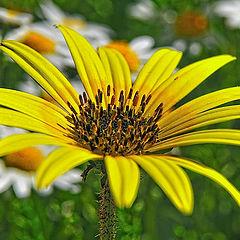"фото ""wild flower"""