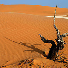 "фото ""Цвета пустыни"""