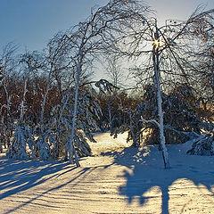 """фото """"Морозным утром, в начале марта"""""""