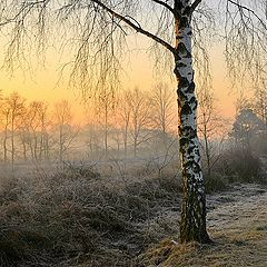 """фото """"a cold morning"""""""