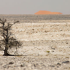 "photo ""The color of the desert - 2"""