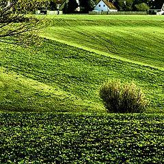 "photo ""пейзаж в зелено..."""