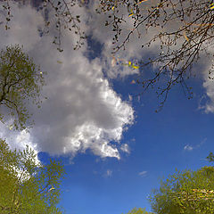 """photo """"The reflection of the spring. Inverted World."""""""