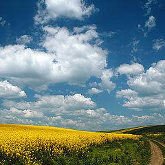 "фото ""Spring landscape."""