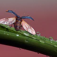 "photo ""макро капли жук"""
