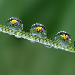 """фото """"Spring in drops"""""""