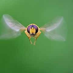 """фото """"Insects in flight"""""""