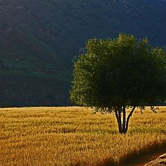 "photo ""One Tree Hill"""