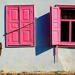 """фото """"Y pink"""""""
