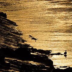 "photo ""Golden Landing"""